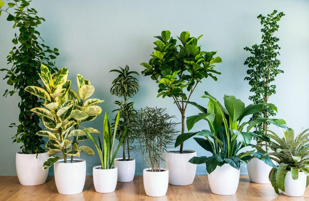5 biljaka koje čiste vazduh u stanu